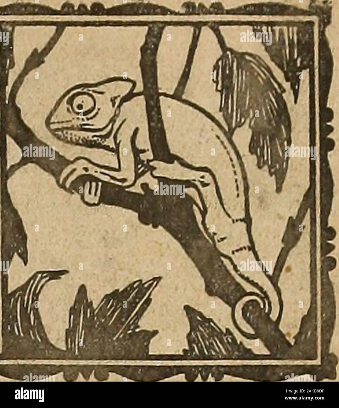 Blätter für Aquarien- und Terrarien-Kunde . // Stock Photo