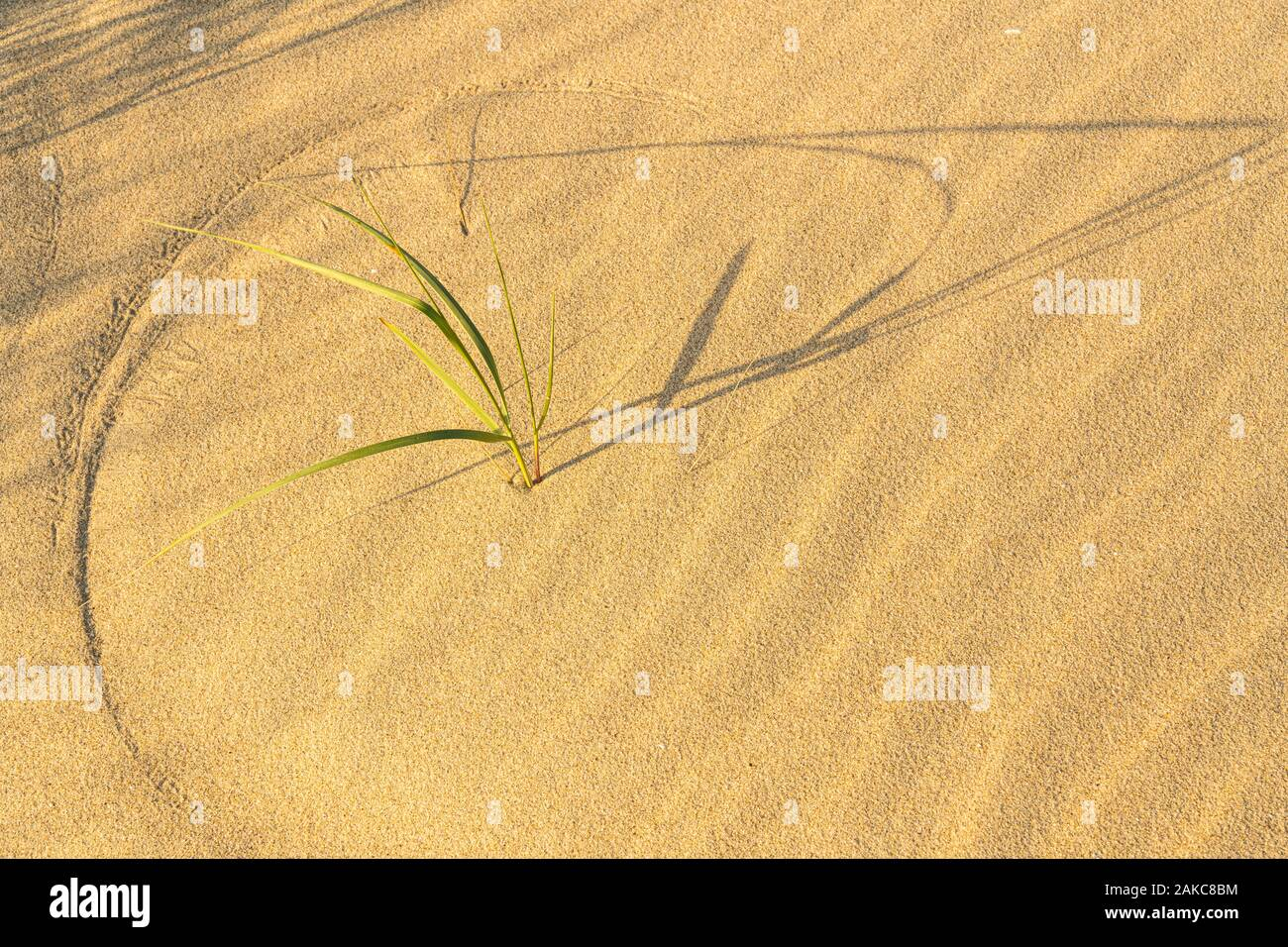 Les Oyats Le Crotoy oyat stock photos & oyat stock images - alamy