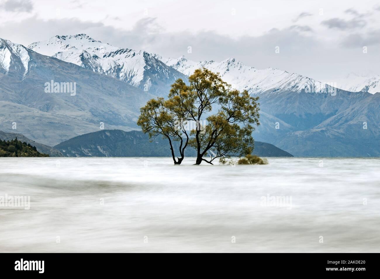 Flooded tree and snow covered mountains on Lake Wanaka New Zealand Stock Photo