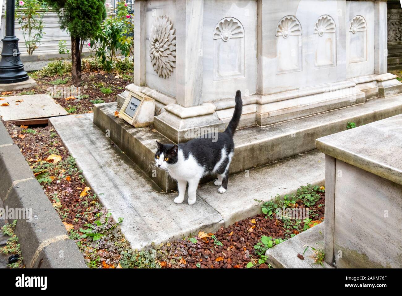 A stray black and white cat stands on the medieval tomb of Sultan Sadi Pasa's tomb in the historic interior courtyard of the Ahmet Tevfik Paşa Tomb. Stock Photo