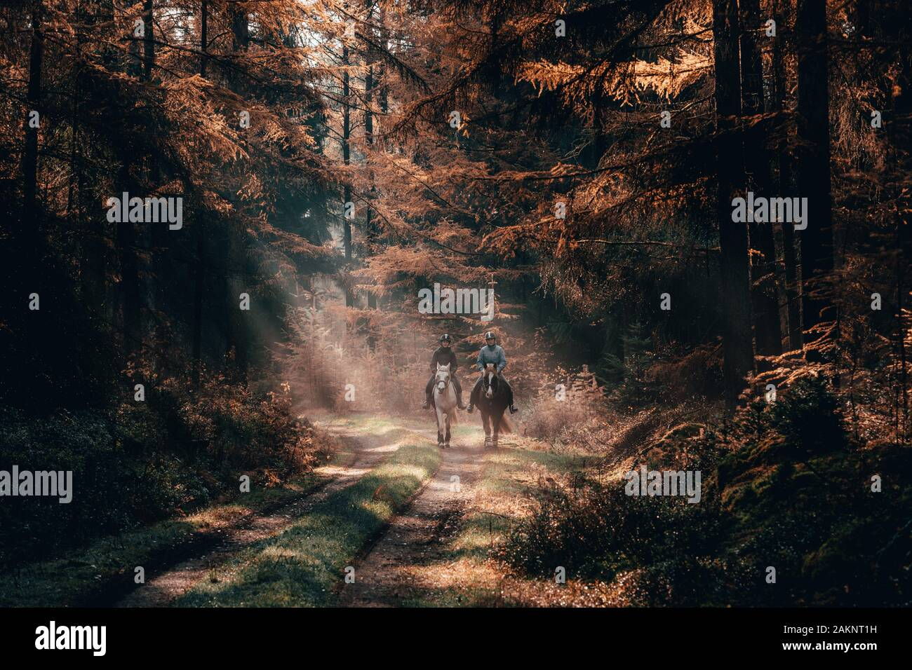 Luneberg, Germany - Nov 10, 2019: Two female esquestrians ride horses in the Heide forests woodand with autumn golden sunlight cast over them Stock Photo