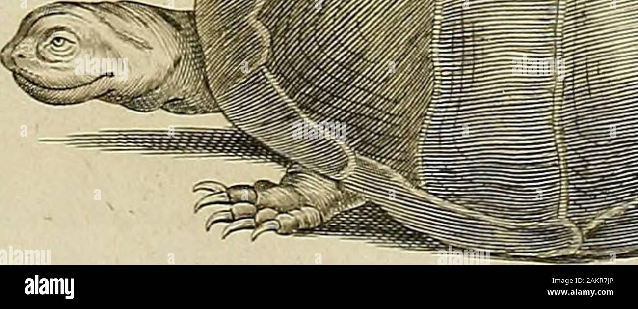 Tableau encyclopédique et méthodique des trois règnes de la nature : dédié et présenté a MNecker, ministre d'État, & directeur général des Finances . Stock Photo