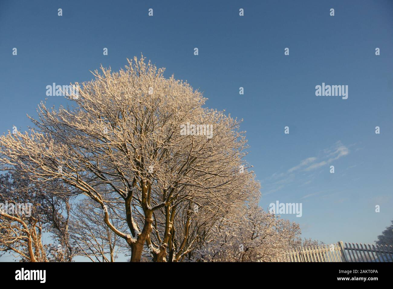 snow covered landscape Stock Photo