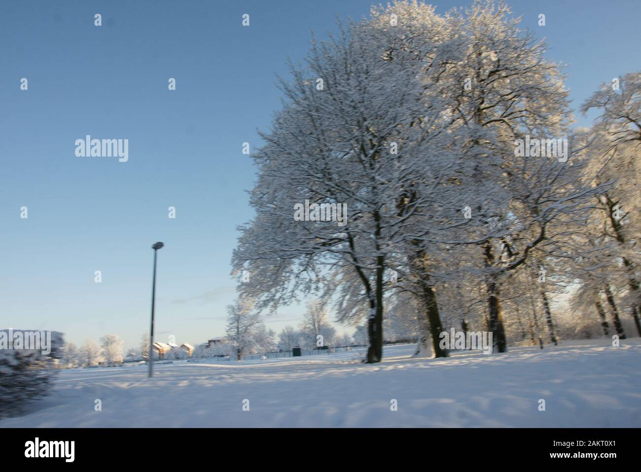 snow covered trees Stock Photo