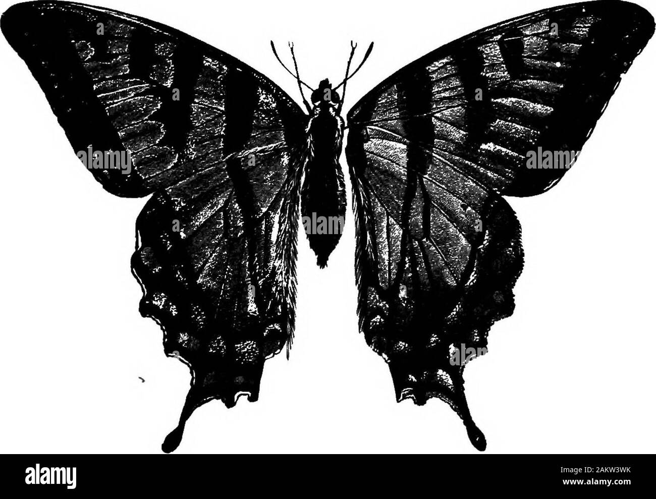 First lesson in zoology : adapted for use in schools . BUTTEBFLT AND OTHER 8CALT-WINGEB INSECTS. Ill The tongue is the only means by which the butterfly canobtaiu food. It sips or sucks up the nectar at the bottom. Stock Photo