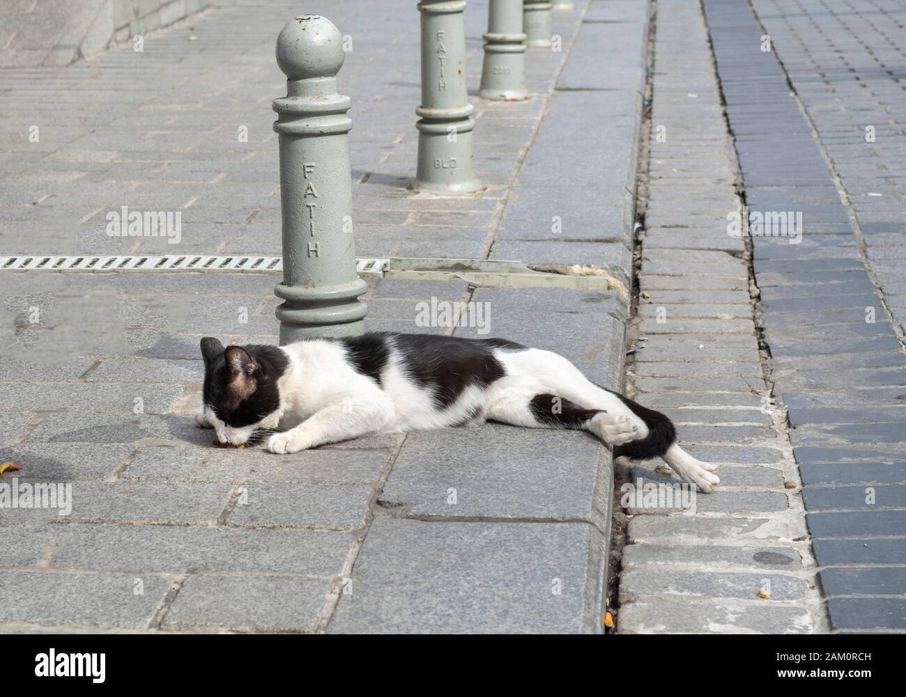 A stray black and white short hair cat eats food off the sidewalk as he lays along a street in Istanbul, Turkey. Stock Photo