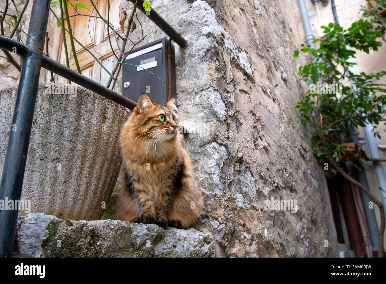 A beautiful long haired tabby watches cautiously from the doorstep of a medieval home in the village of Gourdon, France. Stock Photo