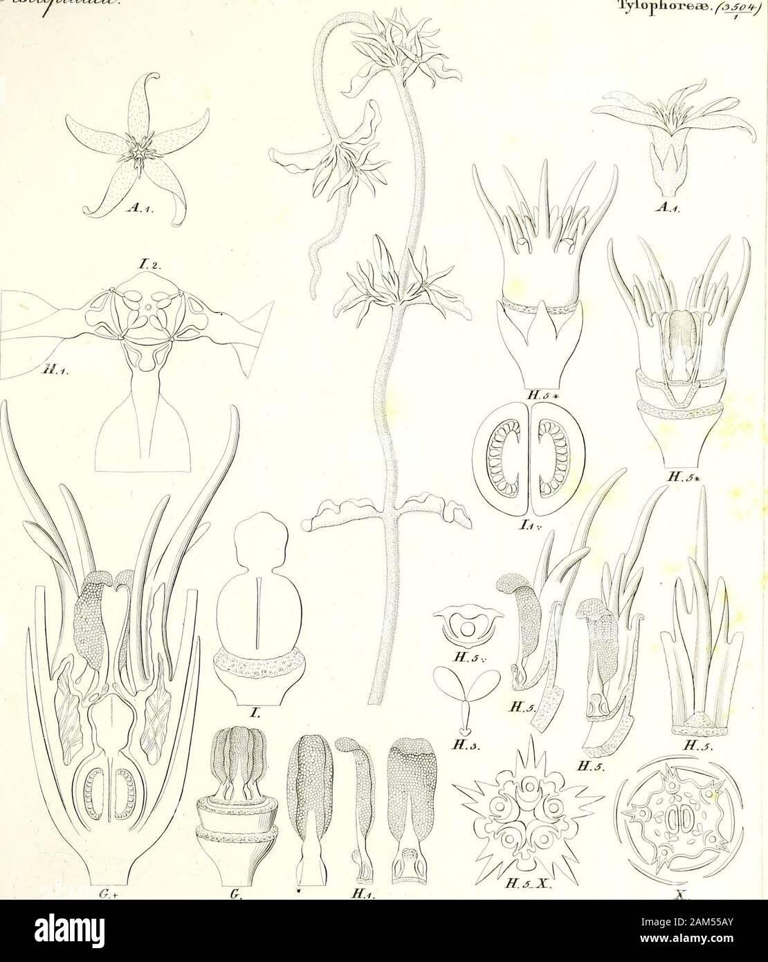 Iconographia generum plantarum . te^W^ ov/bTtzceciu w. .(S.&mt. &3! j^hiadete. TyLopli oreas. fqjojt-J. I ffiJj cafe&t J^Mart *>. fgfj ^[Uoiz^T^n^a^. fayafc/ Stock Photo