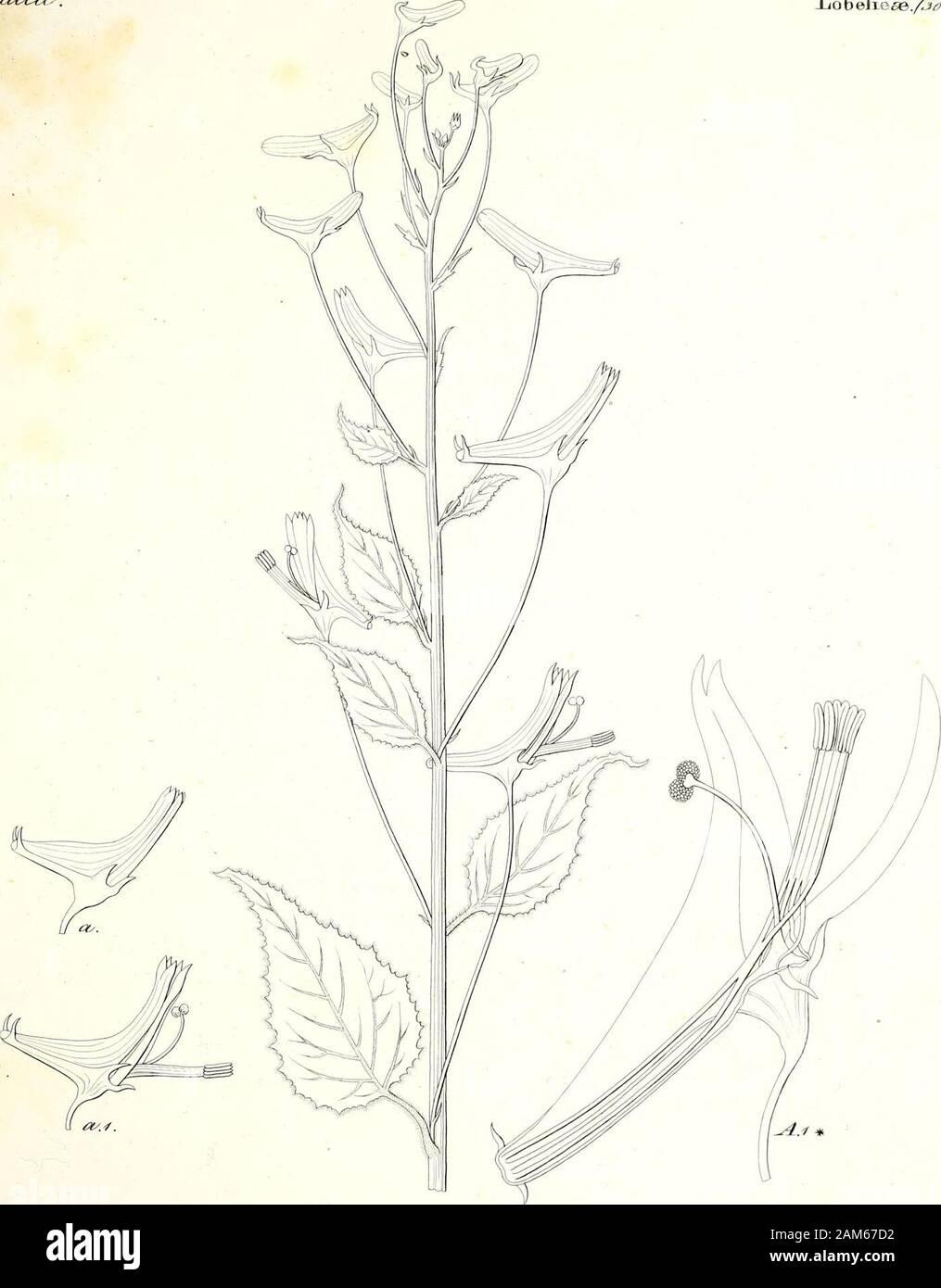 Iconographia generum plantarum . ^yyf^ *. y.52/ /w//zai6&/. Iiob elie^e./S^/^.,. , %%? - ZeArtz&r ddt J^£*Un<Z&&j£ S^ 3 / (y/leac- Olein ese/j^v^. a/J Stock Photo