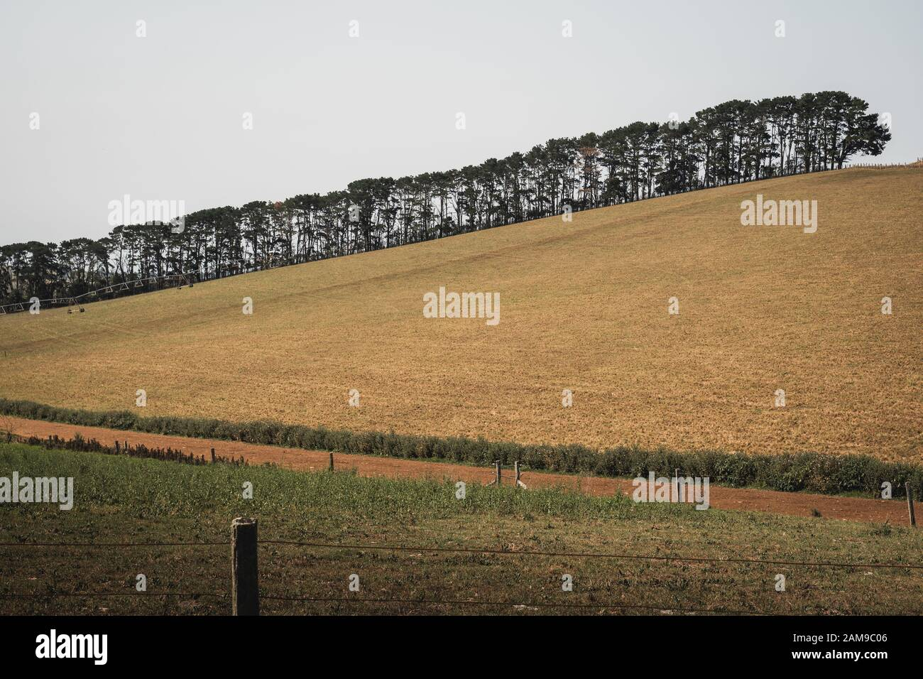 Grassy Australian field with tree line in the background in the ...