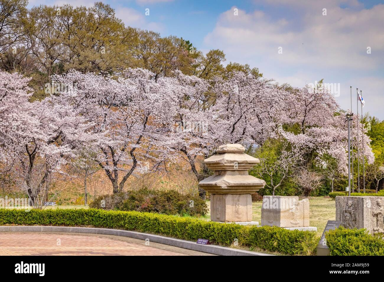 31 March 2019: GyeongJu, South Korea - Cherry blossom and carved blocks of stone in the grounds of Gyeongju National Museum. Stock Photo