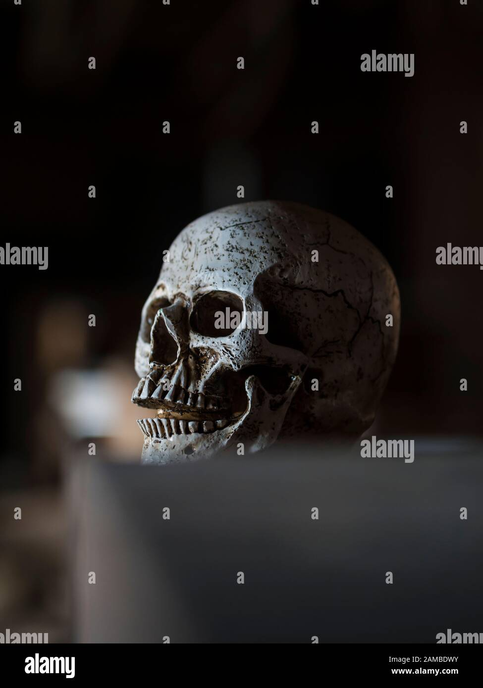 Human skull at midnignt mid-night sidelight Black blurry dark background looking aside away Stock Photo