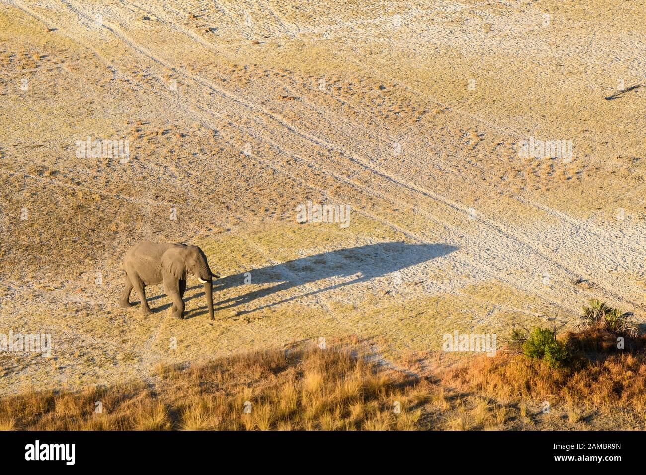 Aerial view of African Elephant, Loxodonta africana, and shadow, Macatoo, Okavango Delta, Botswana Stock Photo