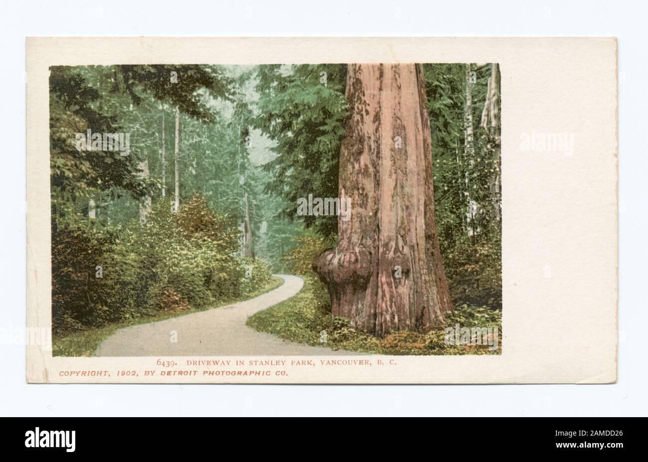 Driveway,Streets,Stanley Park,Vancouver,British Columbia,Detroit Publishing,1902 Photo