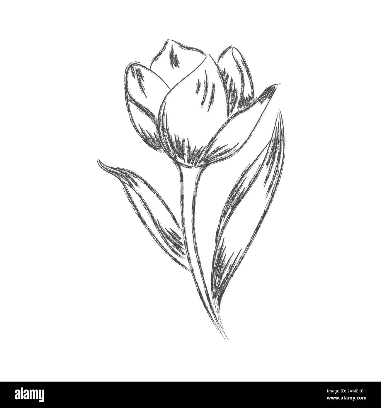 Vector Pencil Drawing Of A Flower With Leaves Isolated On A White