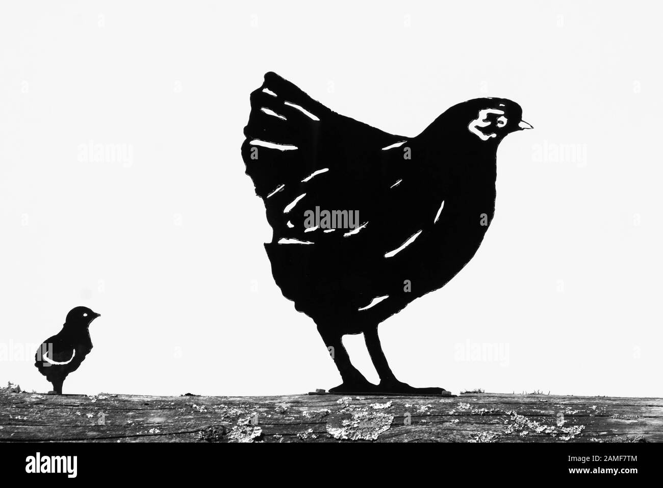 Chicken Silhouette – On this page presented 34+ chicken silhouette photos and images free for download and editing.