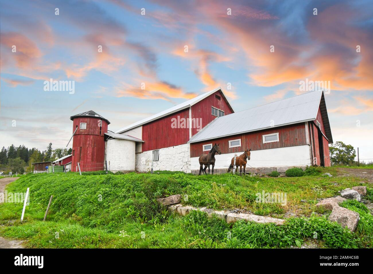 Two horses stand together outside a large red barn and silo in the countryside under a colorful sunset sky. Stock Photo