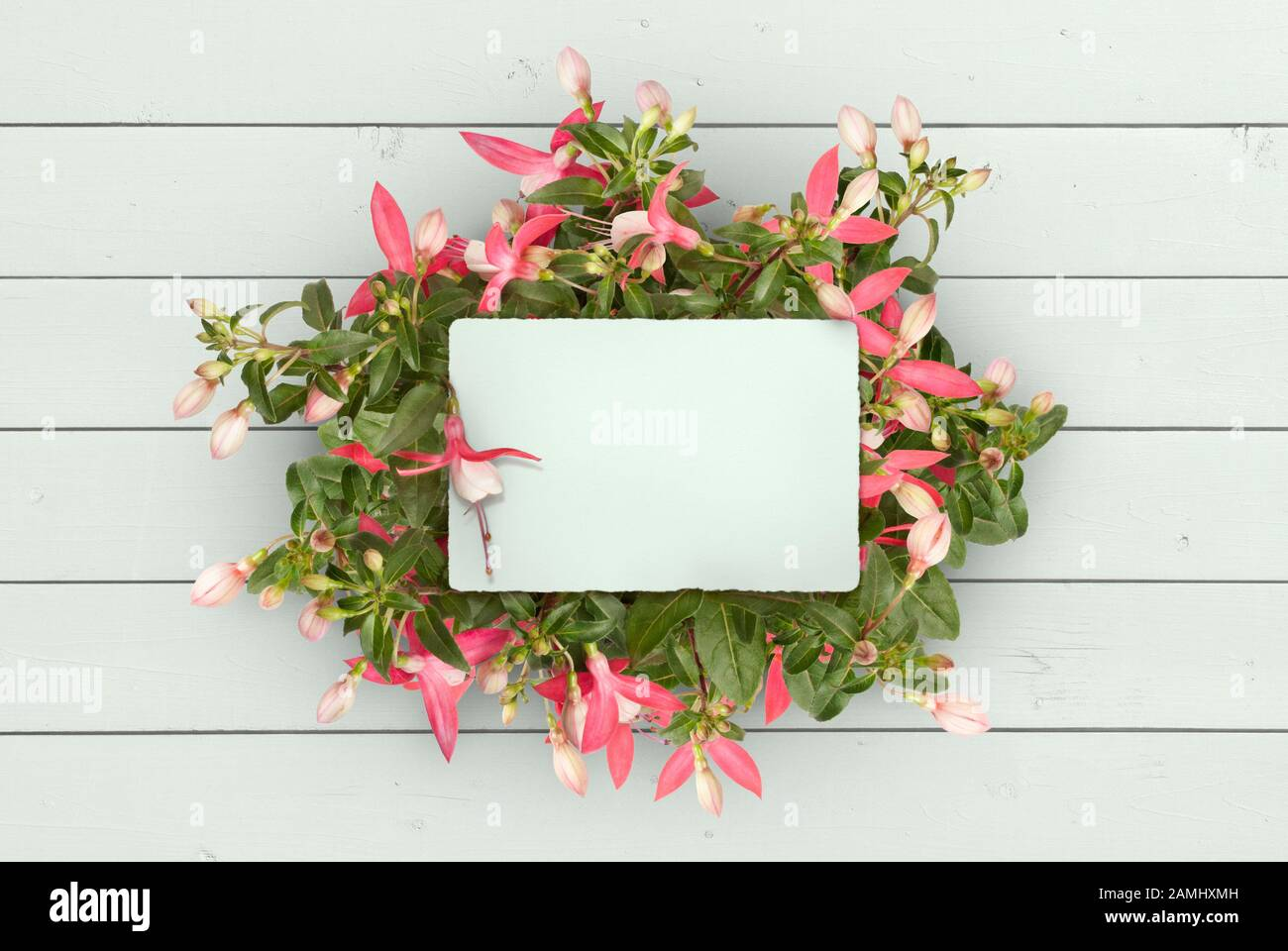 mockup flat lay of blank paper card in pink fuchsia plug plant, on mint green wooden planks background Stock Photo