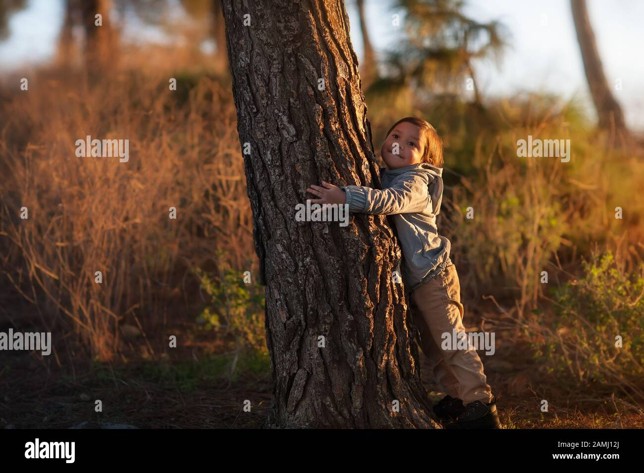 A cute little boy hugging a pine tree on a hill top during a sunset. Stock Photo
