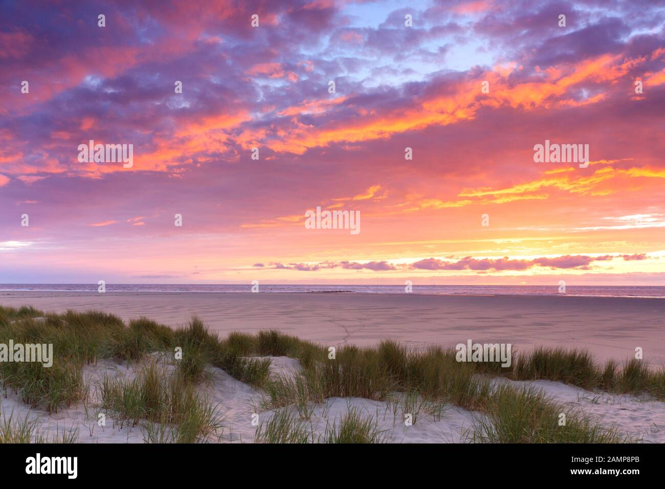 Beach and marram grass / beachgrass (Ammophila arenaria) in the dunes on Texel at sunset, West Frisian Island in the Wadden Sea, the Netherlands Stock Photo