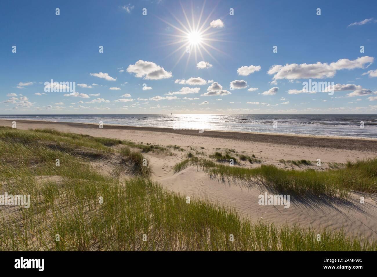 Beach and European marram grass / beachgrass (Ammophila arenaria) in the dunes on Texel, West Frisian Island in the Wadden Sea, the Netherlands Stock Photo
