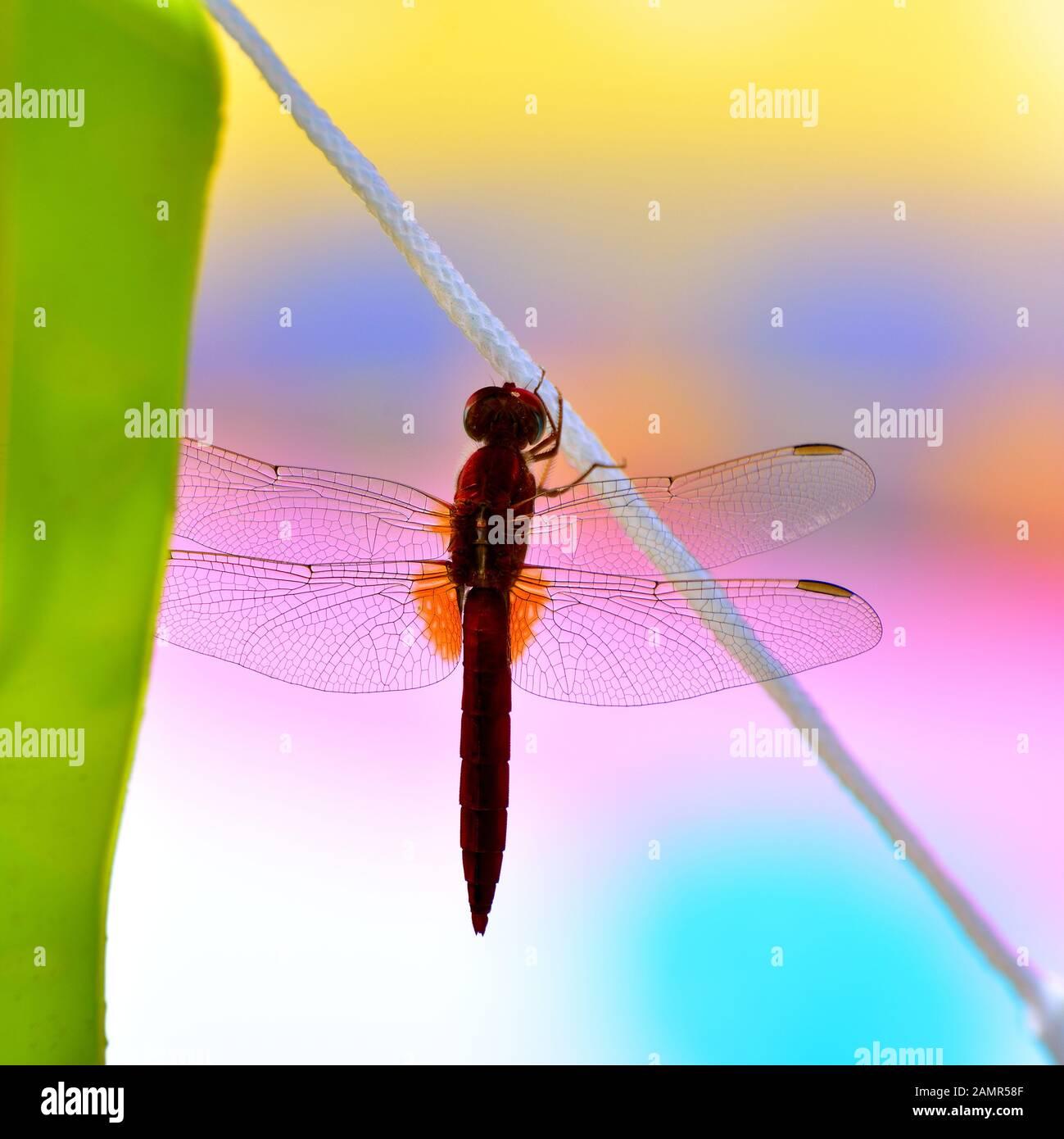 Origami Dragonfly - Make-Origami.com | 1390x1299