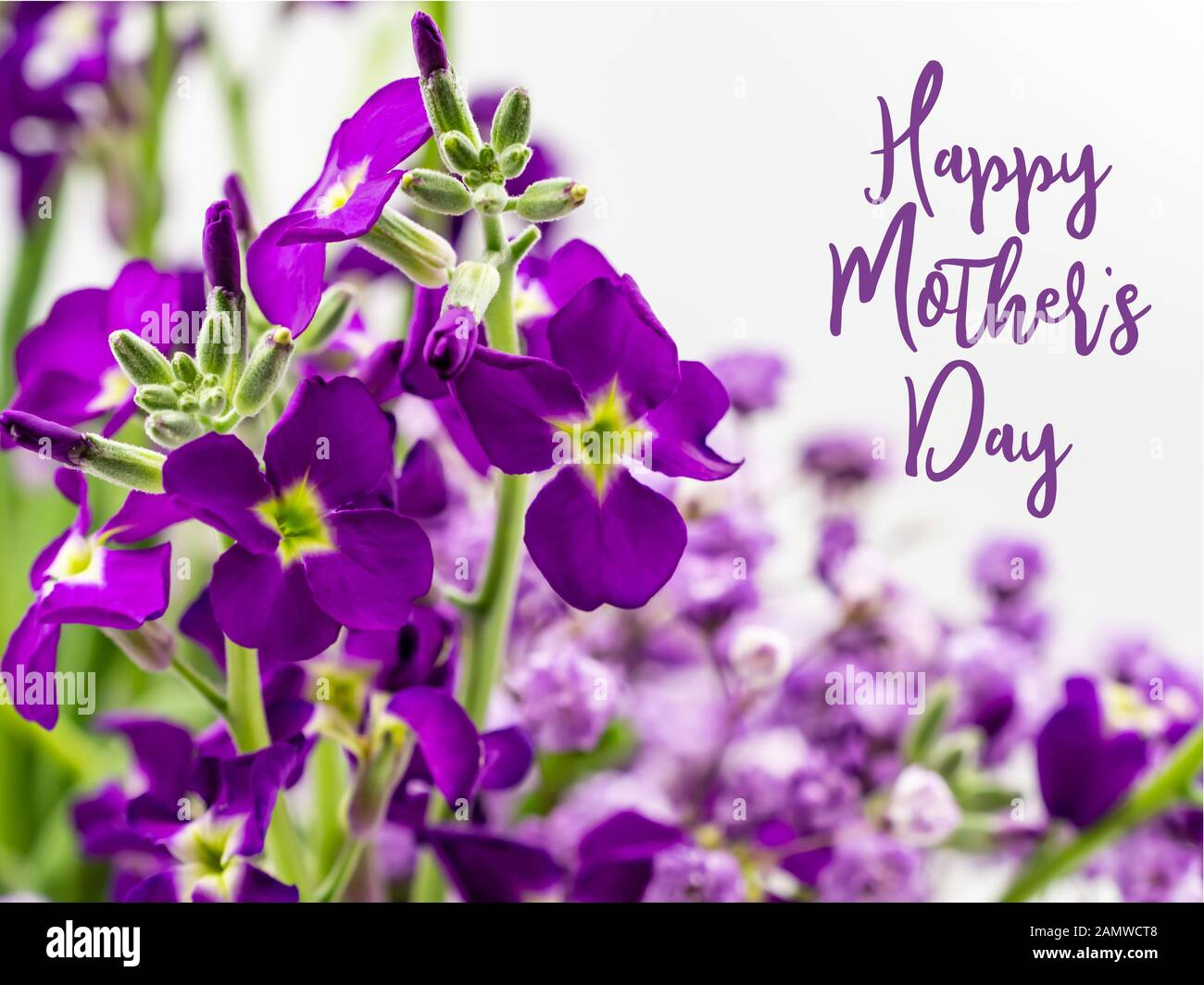 Happy Mother S Day With Beautiful Purple Flowers Stock Photo Alamy
