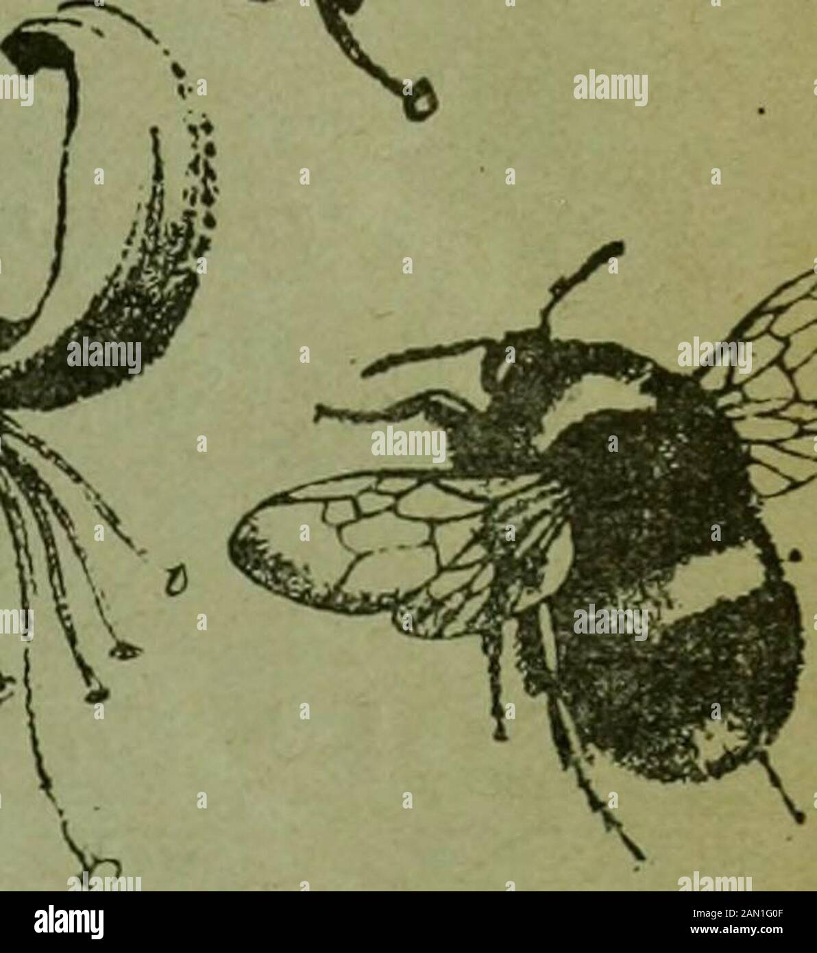The Entomologist's record and journal of variation . THE ENTOMOLOGISTS RECOF AND JOURNAL OF VARIATIC Edited hv Richard S. BAGNALL., f.l.s., f.e.s. 1 T. A. CHAPMAN, m.d.,f.z.s., T. HUDSON BE ARE, B.SC, F.E.8., I.a.S.K. George T. BETHUNB-BAKER, p.z.s., f.l.s., f.e.s.m. burr, d.sc, f.z.s., f.i..s., f.k.s.(Rbv.) C. R. N. BURROWS, f.e.s. Jas. E. COLLIN, F.K.s.H. St. J. K. DONISTHORP]F.z.a.,Alfred SICH, f.e.s.J. R. le B. TOMLIN, M.A., F.BGeorge WHEELER, M.A., F and Hknry J. TEtliti Stock Photo