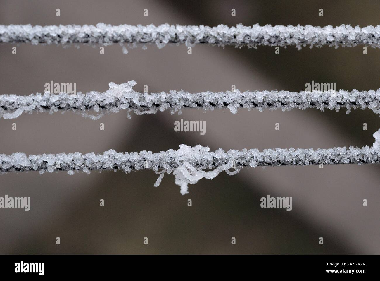 Hoarfrost on the ropes in winter closeup. Shallow depth of field Stock Photo