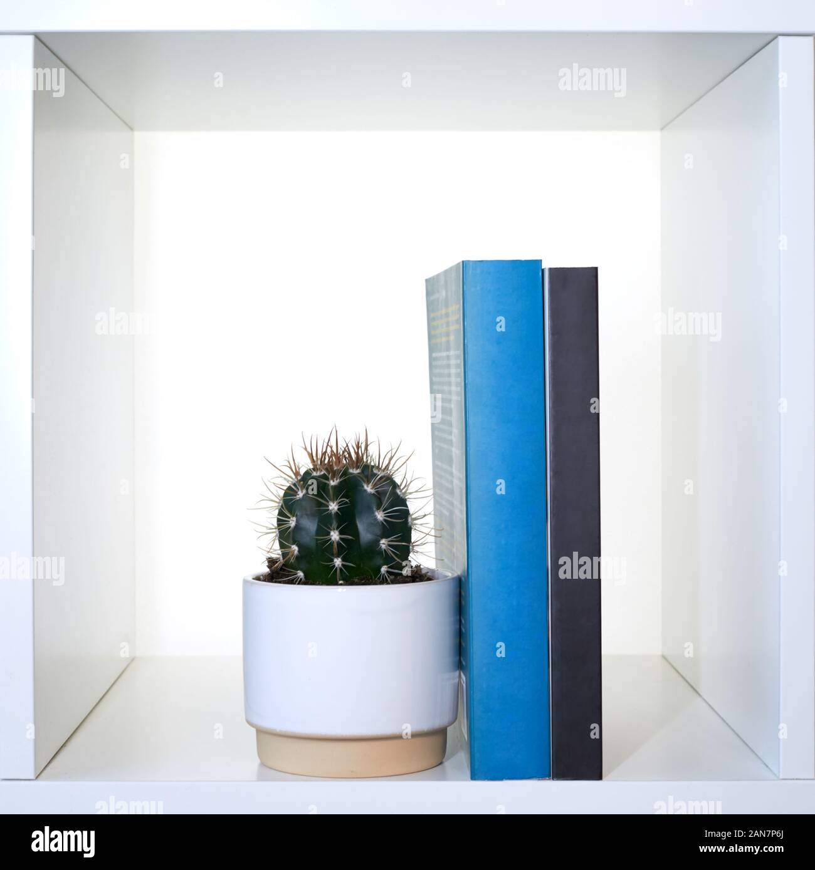 Cactus and books on a shelf Stock Photo