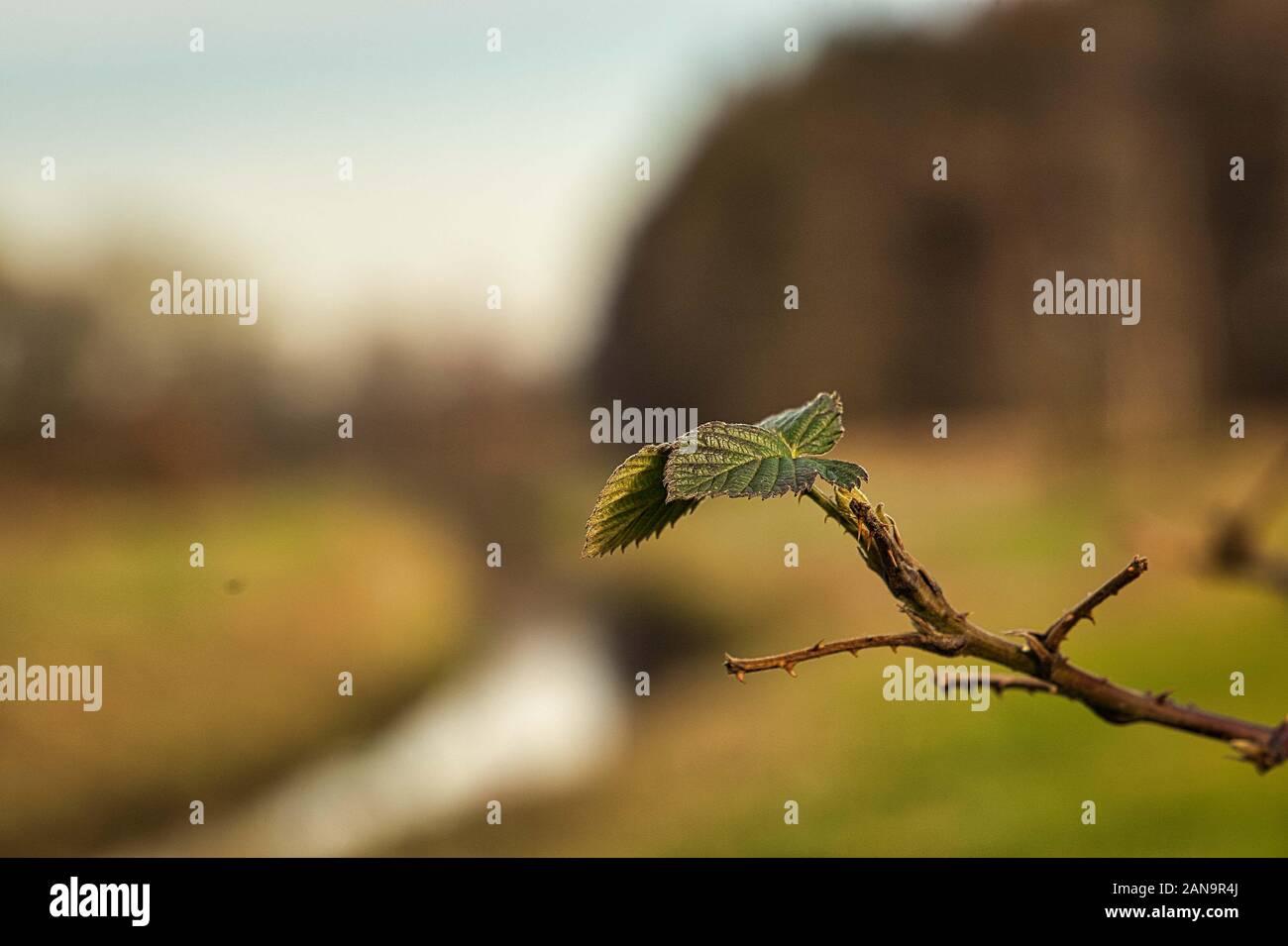 Nordradde nahe Schloss Clemenswerth bei Sögel im Januar 2020 bei warmen Wetter im Winter, Blätter, Blatt mit Bokeh an der Nordradde im Emsland Stock Photo