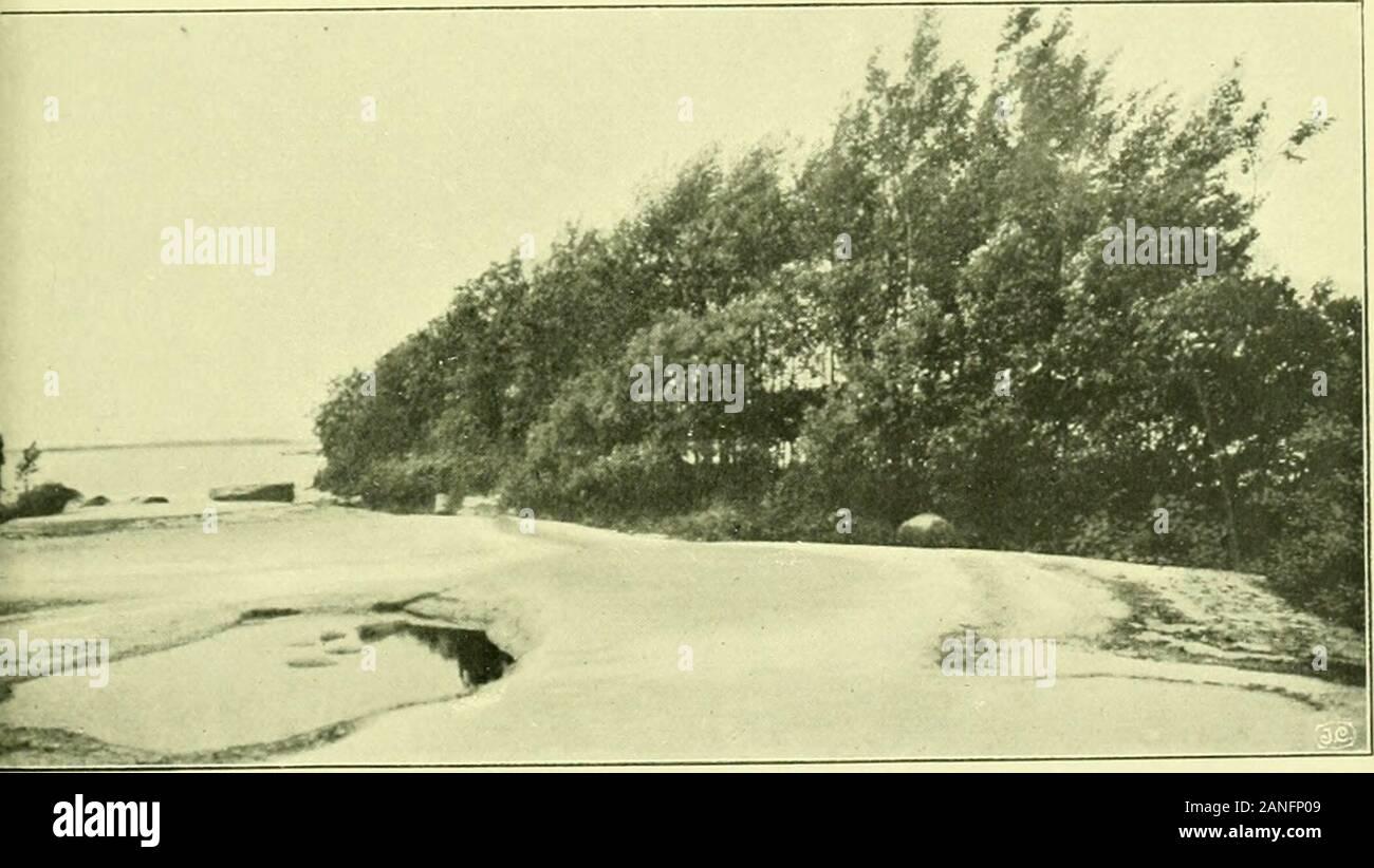 Arkiv för botanik . Det 22 år gamla skäret 2 vid Tjuran.För framtida orientering må meddelas, att bilden är tagen från båt somroddes i linjen Tjuran — skäret, (s. b. foto. d. i8. 6. 04.). Skär 3 vid Tjuran (22 år gammalt).Bilden är tagen från punkten H fig. 4. I bildens vänstra kant synes enCAREX ACUTA rugge och en ALNUS GLUTINOSA, motsvarar A fig. 4. Ifonden den med D. fig. 4 betecknade vattensamlingen. Mellan skogen och hällenden vattenfyllda sänkan der HELODEA CANADENSIS och LEMNA MINOR lefva. (S. B. fo-to d. 21. 6. 04.) J. Cederquist Auto. o. tr. Arkiv för Botanik Band 5, N:o 1. Tafl. 2. Stock Photo