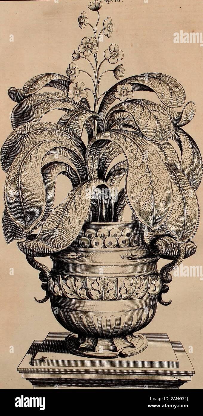 Naauwkeurige beschryving der aardgewassen, waar in de veelerley aart en bijzondere eigenschappen der boomen, heesters, kruyden, bloemen, met haare vrugten, zaden, wortelen en bollen, neevens derzelver waare voort-teeling, gelukkige aanwinning, en heylzaame genees-krachten ..beschreeven worden; . <FÜJ. I. °j+- I.MUI.ï)} i ; c FE RHABARBARUM LANUGINOSUM SIVE LABATHUM CHINENSF. T.OMr.TFOT rrTM . y Geftalteder Bloe-men. £aad- huysje. Zaad. Aanwin-ning. Geftalteen eygen-fchap derWortel. Gedaanteder Bladcren. Steclcn. 693 Patich. i dig , dik en .digt tros-wijz.e bij malkander , dat rhenbijna Dier Stock Photo