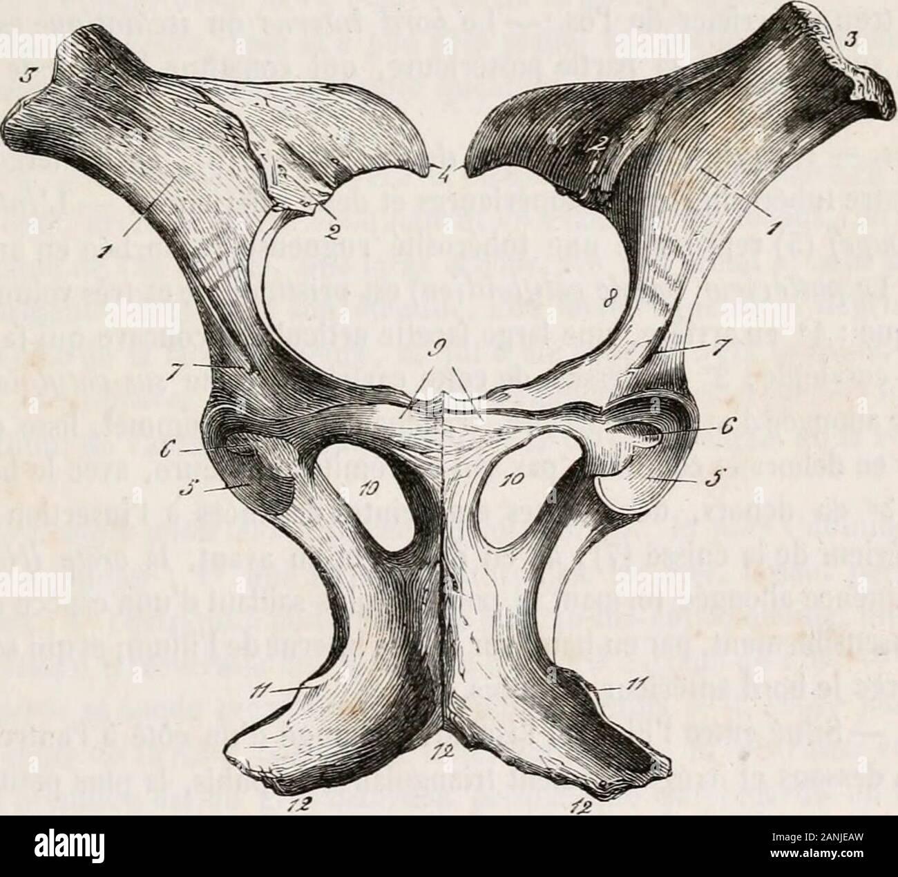 Comparatif Plan De Travail traité d'anatomie comparée des animaux domestiques . luie