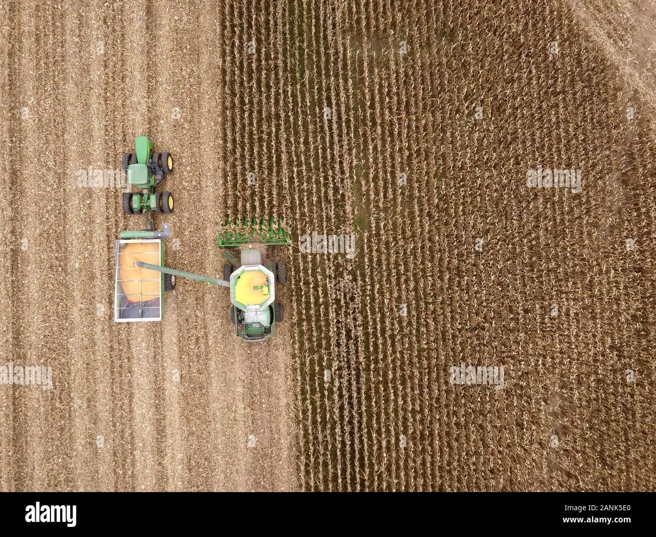 Drone aerial combine corn harvest Ohio Stock Photo