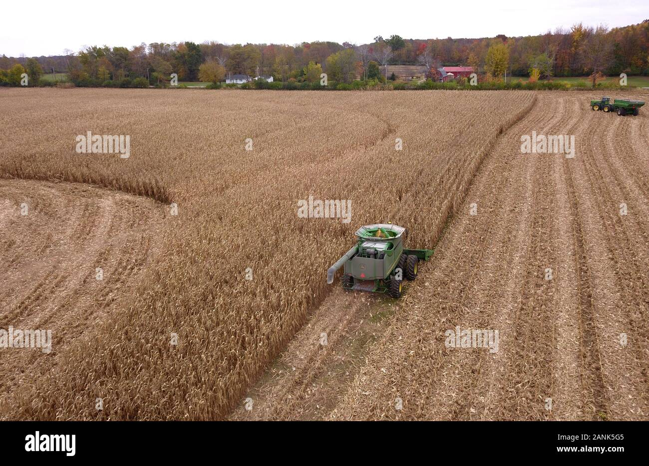 Drone aerial combine corn harvest Ohio Stock Photo