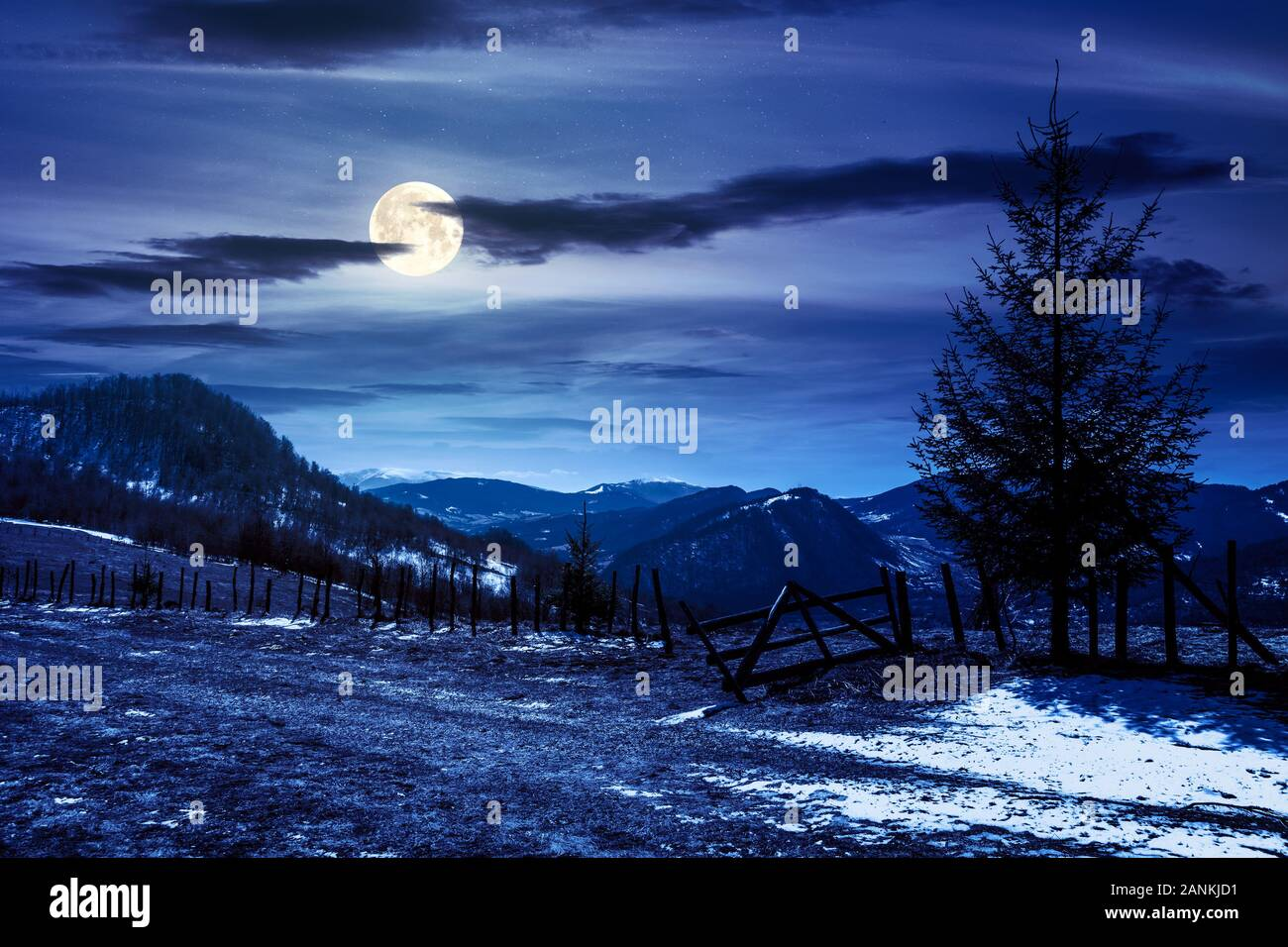 Spruce Trees On The Mountain Hill At Night Early Springtime Weather With Clouds On The Sky In Full Moon Light Snow And Grass On The Meadow Valley A Stock Photo Alamy Clouds mountains trees grass spruce fog