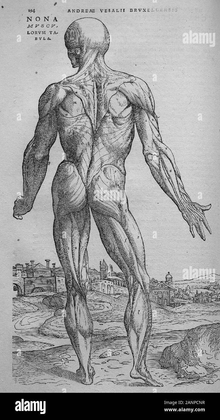 """Illustrations from De humani corporis fabrica libri septem """"On the fabric of the human body in seven books"""" by Andreas Vesalius. Books on human anatomy published in 1543. Stock Photo"""