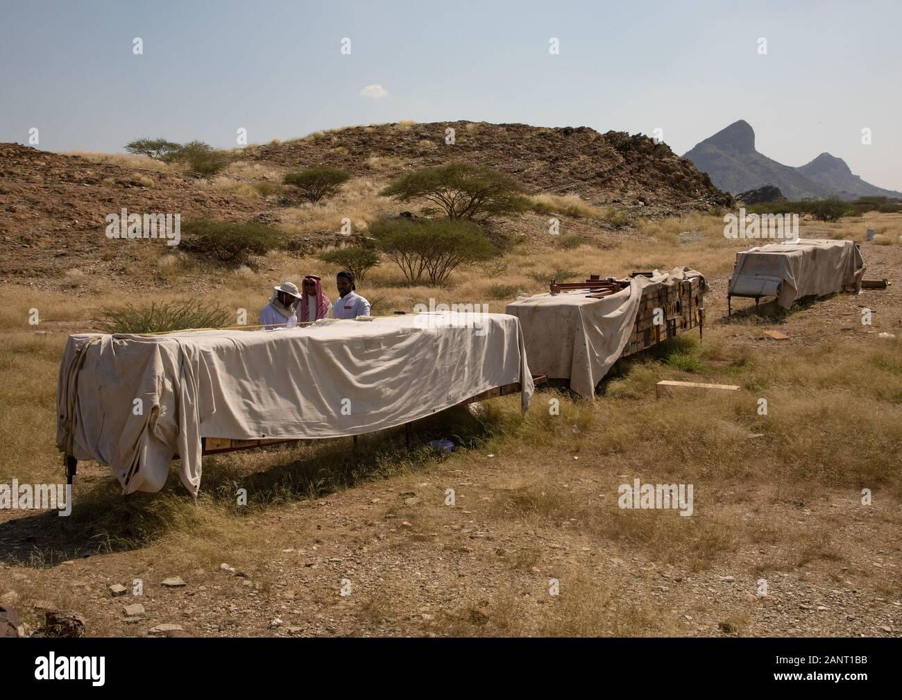Saudi beekeepers working in the beehives, Jizan province, Addarb, Saudi Arabia Stock Photo