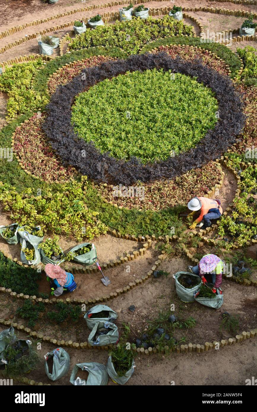 Women work on planting a garden pattern at the pedestrian overpass in Quarry Bay Park in Hong Kong. Stock Photo