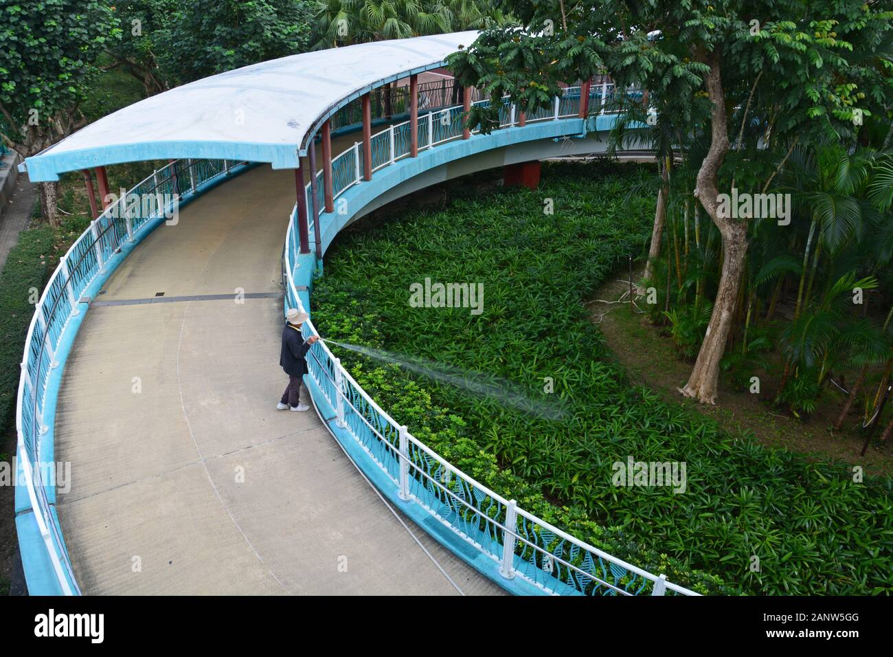 A women waters the plants in a garden at the pedestrian overpass in Quarry Bay Park in Hong Kong. Stock Photo
