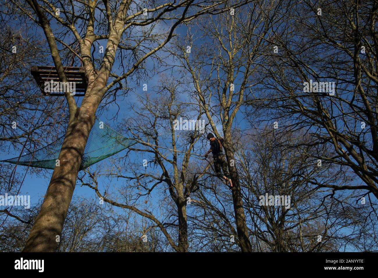 Harefield, UK. 19 January, 2020. A tree-climbing activist uses a line and safety loop to transfer from one tree to another in the Harvil Road wildlife protection camp. Activists from Extinction Rebellion, Stop HS2 and Save the Colne Valley attending a 'Stand for the Trees' event timed to coincide with tree felling work for HS2 have retaken the camp from which a small group of Save the Colne Valley activists had been evicted by bailiffs acting on behalf of HS2 over the previous week and a half. 108 ancient woodlands are set to be destroyed by the high-speed rail link. Credit: Mark Kerrison/Alam Stock Photo