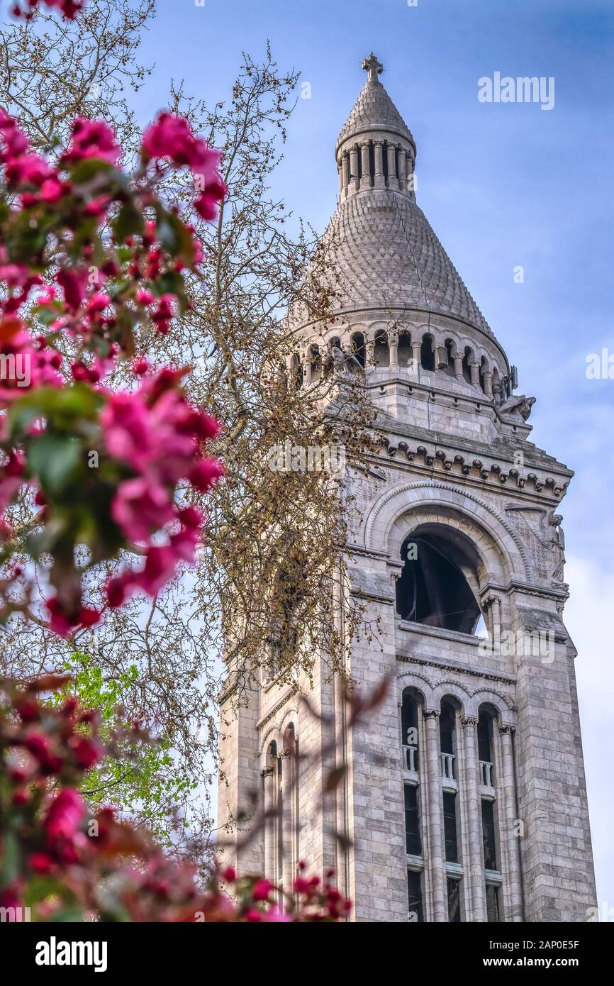 View of Basilica Sacre Coeur in Montmartre in Paris, France. Spring time with cherry blossom trees in the morning. Stock Photo