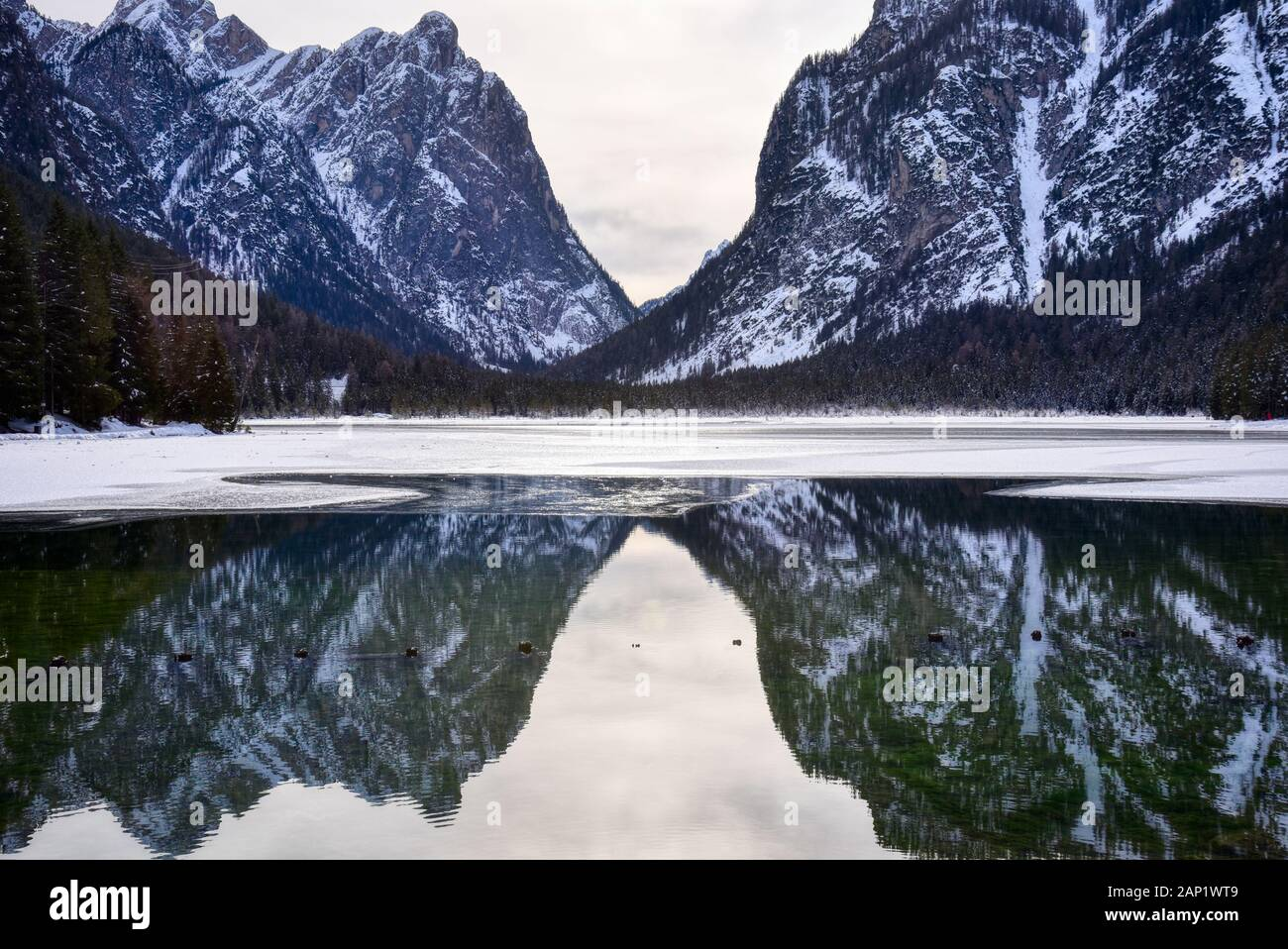 The mountains of the valley are reflected in the not frozen part of the lake of Dobbiaco Stock Photo