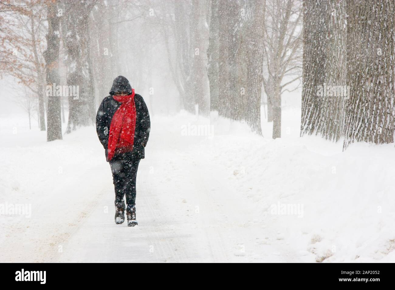 Miserable lone freezing woman walking during a snowstorm Stock Photo