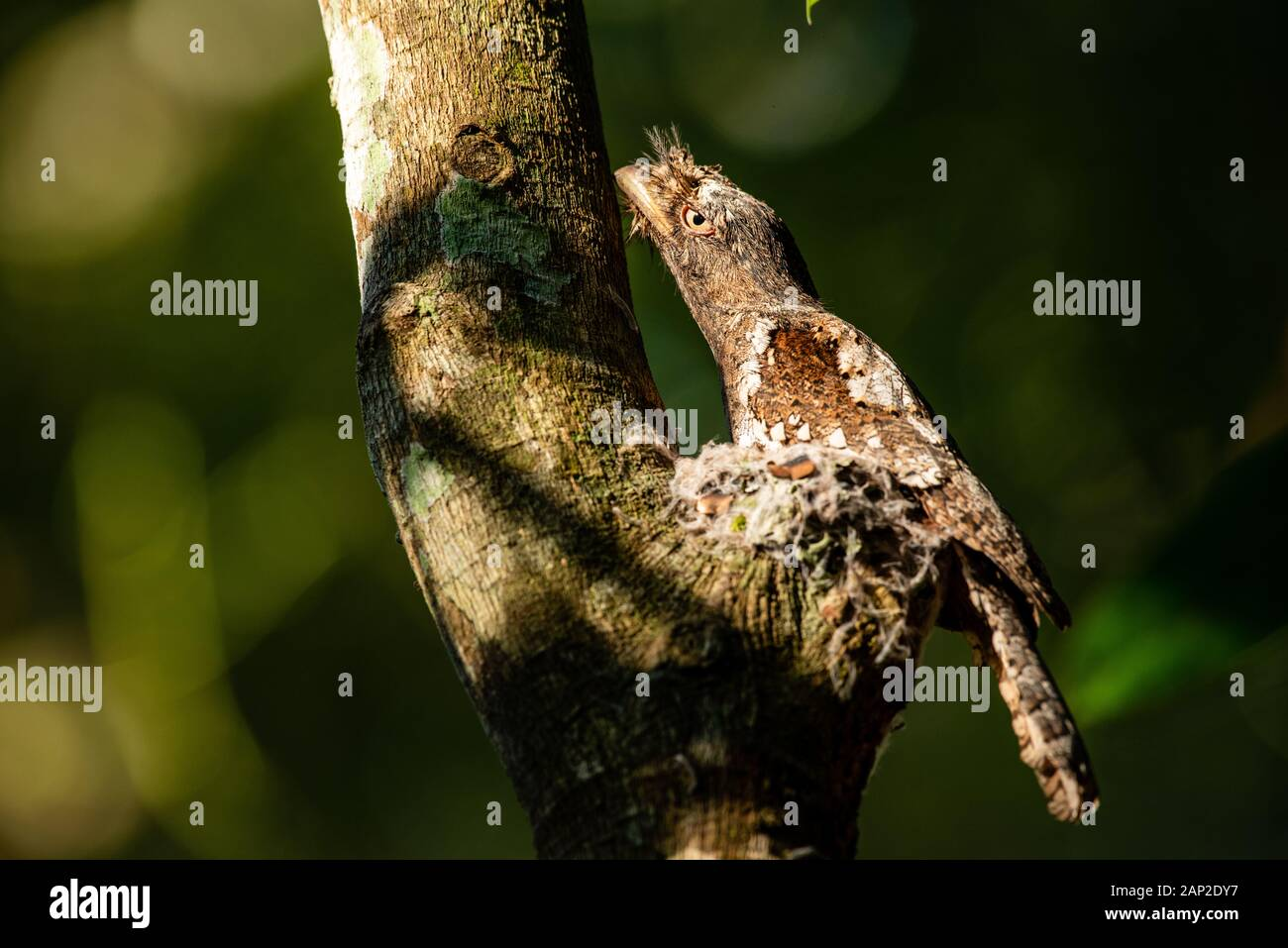 Birds Of Kerala High Resolution Stock Photography And Images Alamy