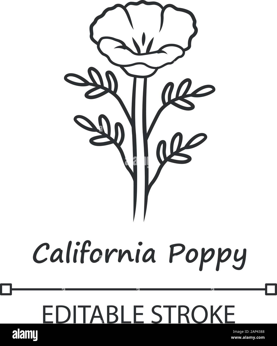 California poppy linear icon. Papaver rhoeas with name. Corn rose blooming wildflower. Herbaceous plants. Field poppy. Thin line illustration. Vector Stock Vector