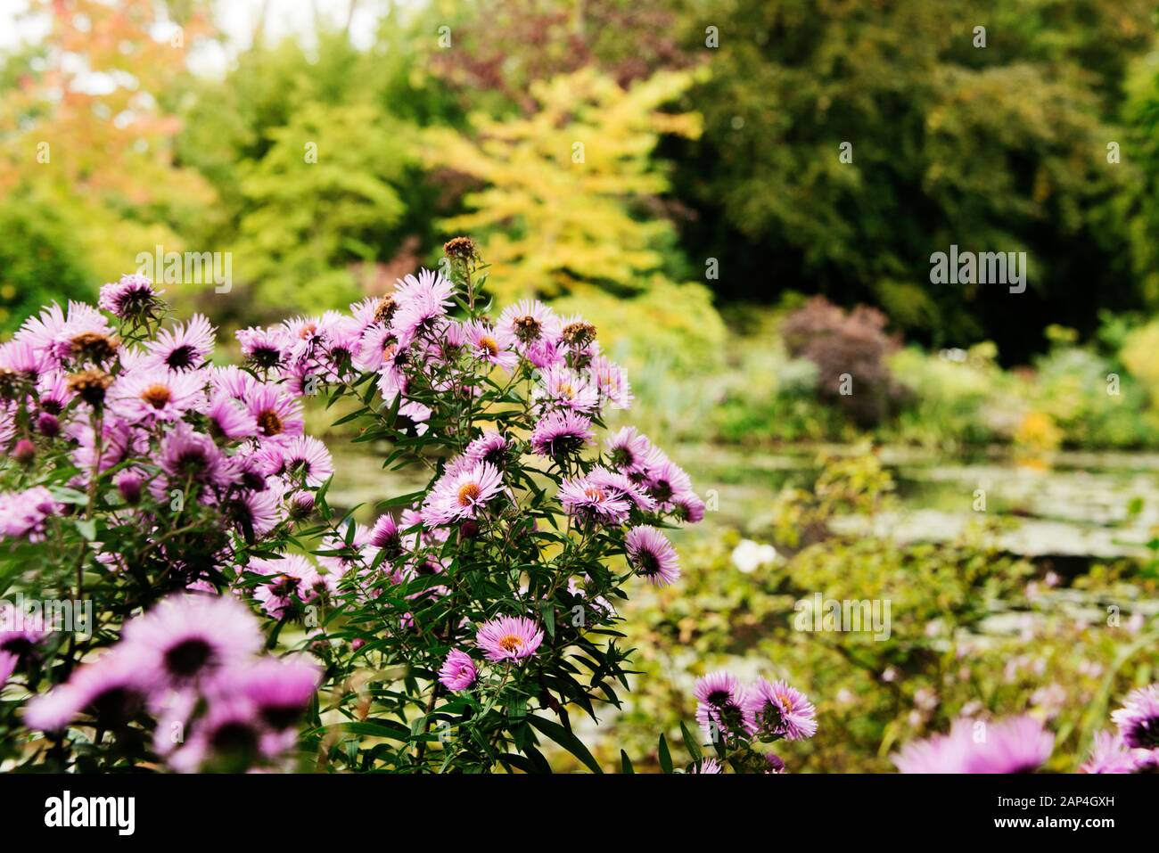 Hoschede Monet High Resolution Stock Photography And Images Alamy