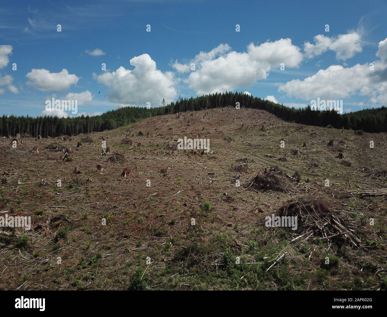 Drone aerial Clear cut logging Olympic Peninsula Stock Photo