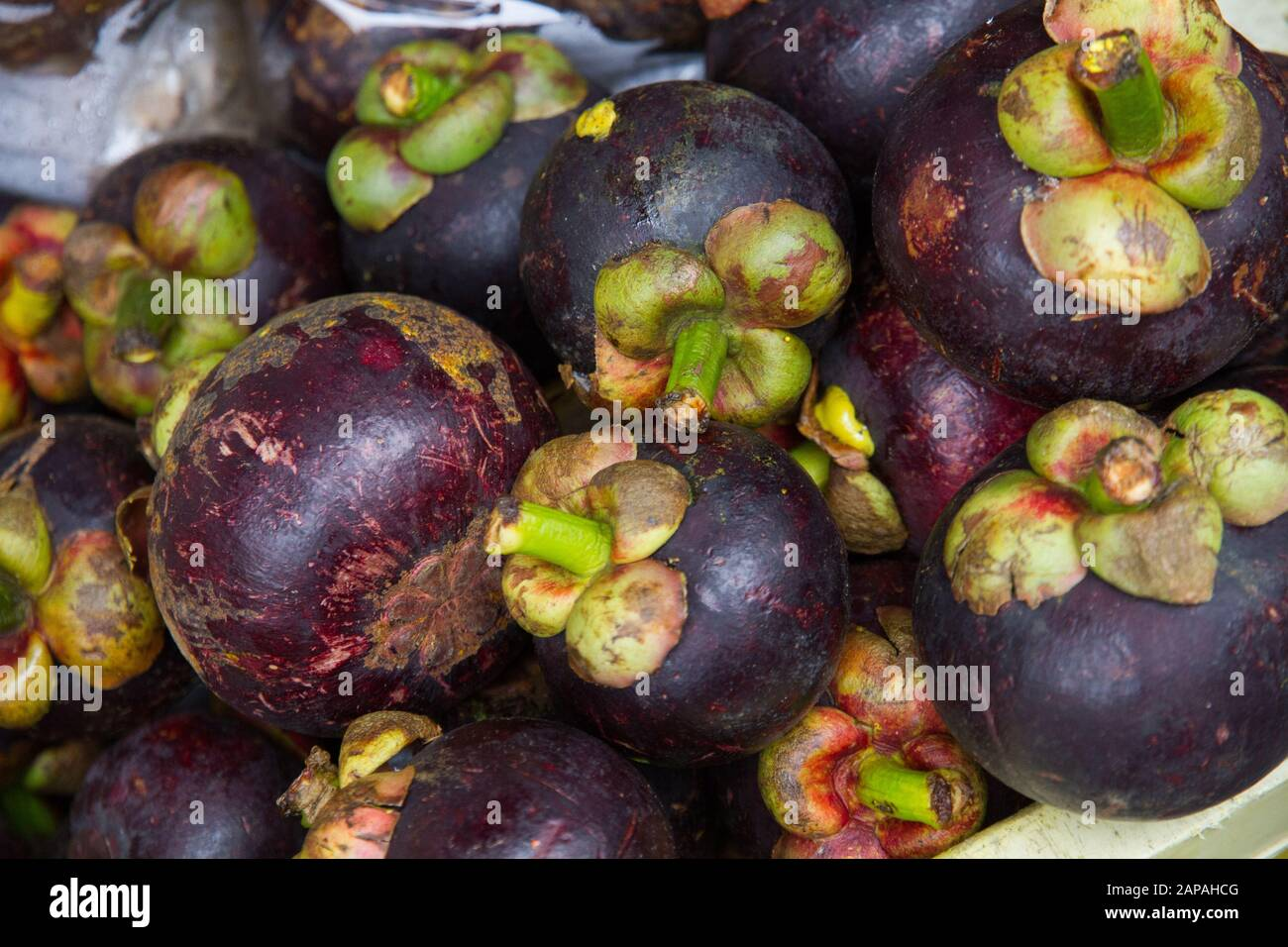 Garcinia Cambogia Fruit High Resolution Stock Photography And Images Alamy